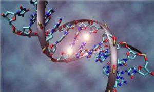 Dịch vụ xác minh ADN, xác minh huyết thông gia đình, các mối quan hệ gia đình
